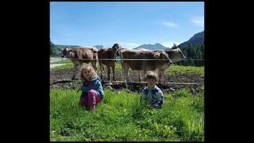 29.09.2016 Alpine Cow's Exibithion