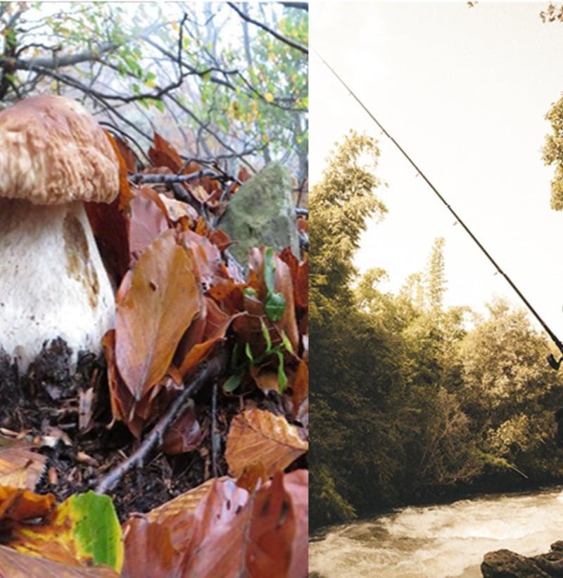 Mushrooms Picking & Fishing