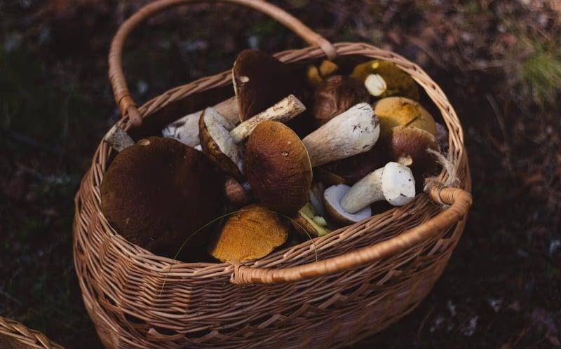 Pilze sammeln und Fischen