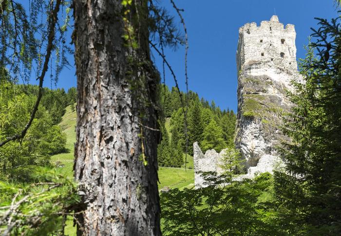 Activities for families: the animals of the Dolomites: wolves and sheep