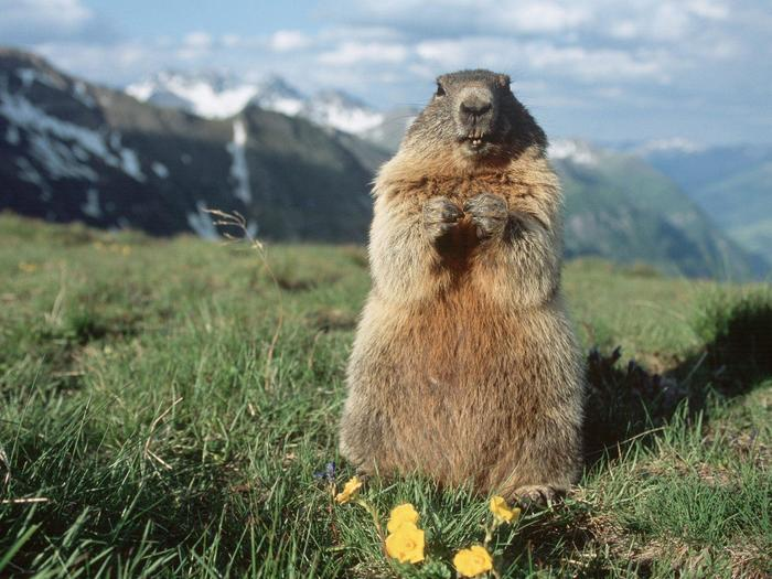 Activities for families: the animals of the Dolomites: eagles and marmots